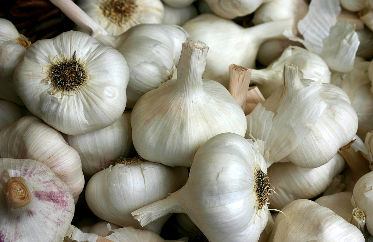 1200px-Knoblauch_2995